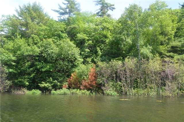 Vacant Land at 4 B207 (Wahsoune) Isl, Muskoka Lakes, Ontario. Image 8