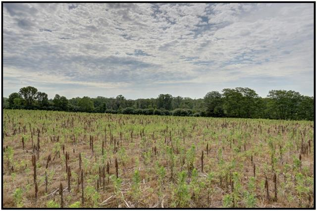 Vacant Land at Pt Lt 9 Workman Rd, Cobourg, Ontario. Image 4