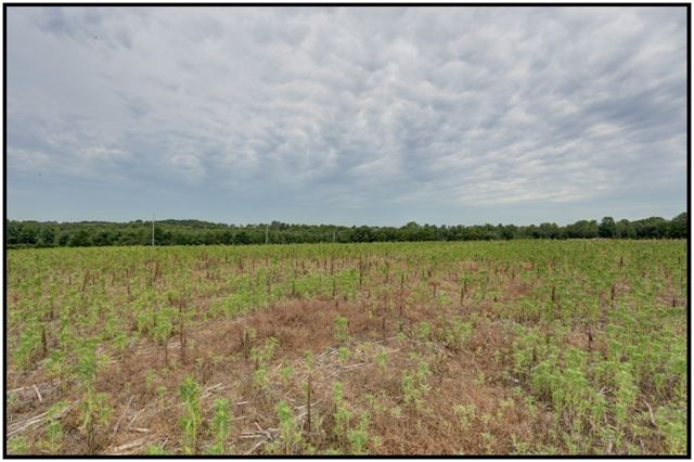 Vacant Land at Pt Lt 9 Workman Rd, Cobourg, Ontario. Image 5