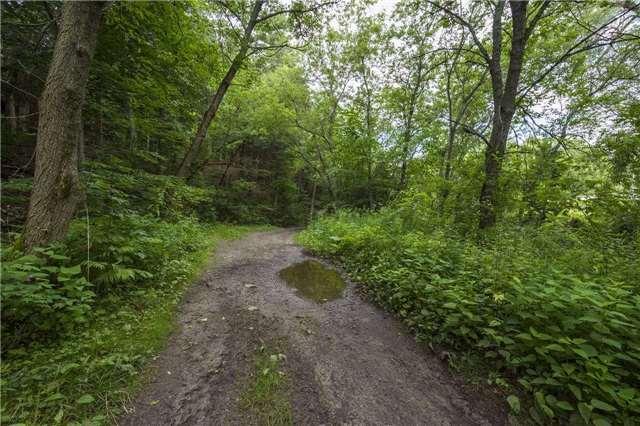 Vacant Land at Lt13 Banta Rd, Trent Hills, Ontario. Image 2