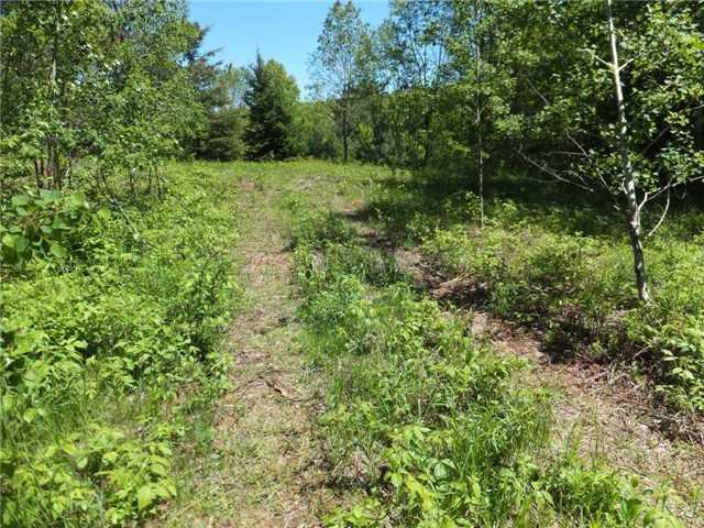 Vacant Land at Lot 8 Bobcaygeon Rd, Minden Hills, Ontario. Image 1