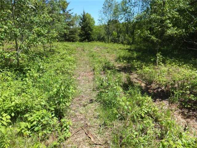 Vacant Land at Lot 8 Bobcaygeon Rd, Minden Hills, Ontario. Image 4