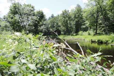 Vacant Land at Lot 22 Flinton Rd, Addington Highlands, Ontario. Image 11