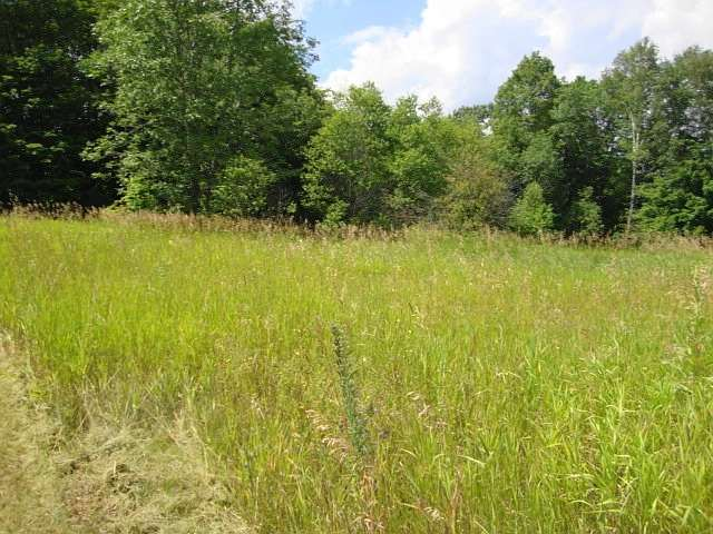 Vacant Land at Lot 22 Flinton Rd, Addington Highlands, Ontario. Image 13