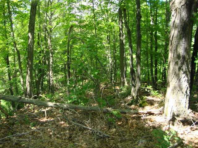 Vacant Land at Lot 22 Flinton Rd, Addington Highlands, Ontario. Image 15