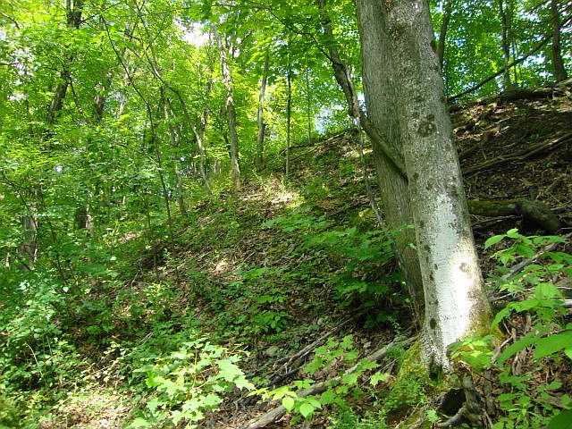 Vacant Land at Lot 22 Flinton Rd, Addington Highlands, Ontario. Image 6