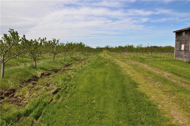 Farm at 4465 John St, Lincoln, Ontario. Image 11