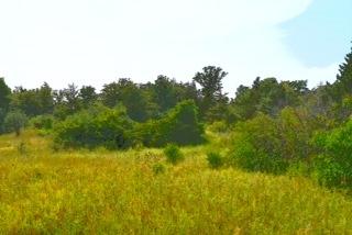 Vacant Land at 0 Airport Lane, Prince Edward County, Ontario. Image 12