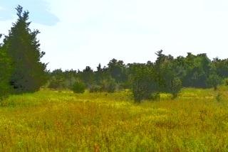 Vacant Land at 0 Airport Lane, Prince Edward County, Ontario. Image 13