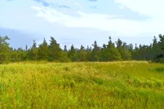 Vacant Land at 0 Airport Lane, Prince Edward County, Ontario. Image 2
