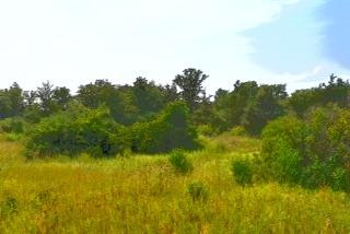 Vacant Land at 0 Airport Lane, Prince Edward County, Ontario. Image 3