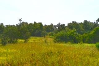 Vacant Land at 0 Airport Lane, Prince Edward County, Ontario. Image 4