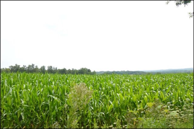 Vacant Land at Vl Ward  Lane, Alnwick/Haldimand, Ontario. Image 13