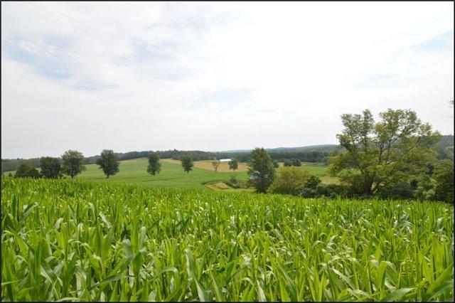 Vacant Land at Vl Ward  Lane, Alnwick/Haldimand, Ontario. Image 14