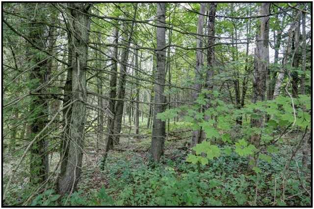Vacant Land at Lt 12 Penryn Rd, Cramahe, Ontario. Image 1