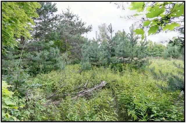 Vacant Land at Lt 12 Penryn Rd, Cramahe, Ontario. Image 2