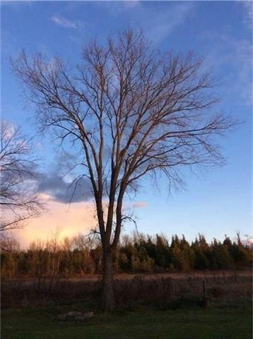 Detached at 98 Driftwood Shores Rd, Kawartha Lakes, Ontario. Image 12