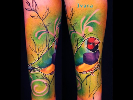 Colorful Gouldian Finch Bird Sitting On Branch Color Forearm