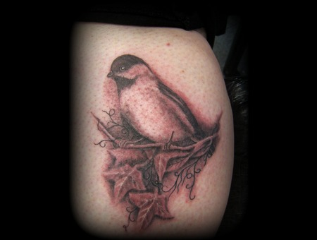 Bird  Robin  Ivy  Leaf  Branch  Realism Black White