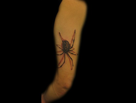 Black And Grey  Spider  Realistic  Shadow  Black Widow Black White