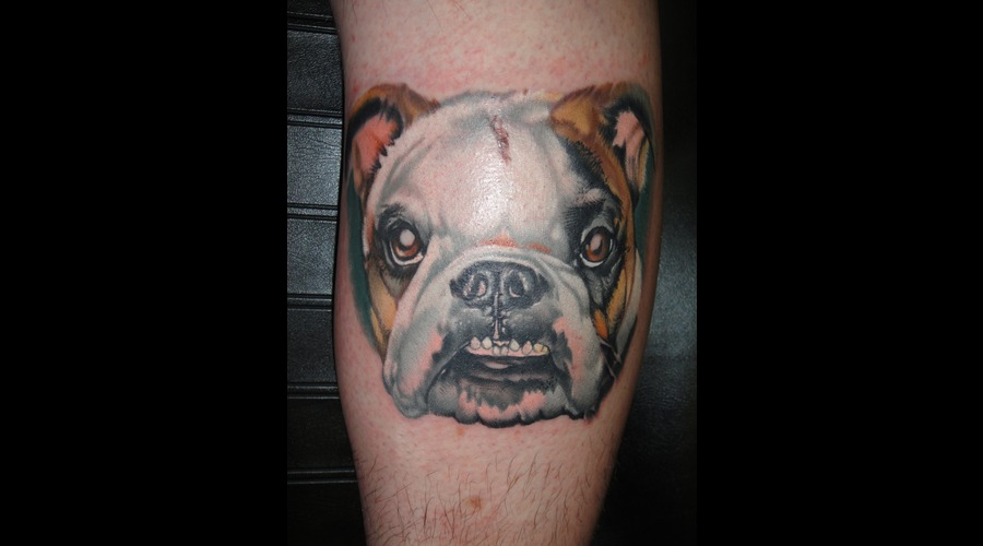 Bulldog Color