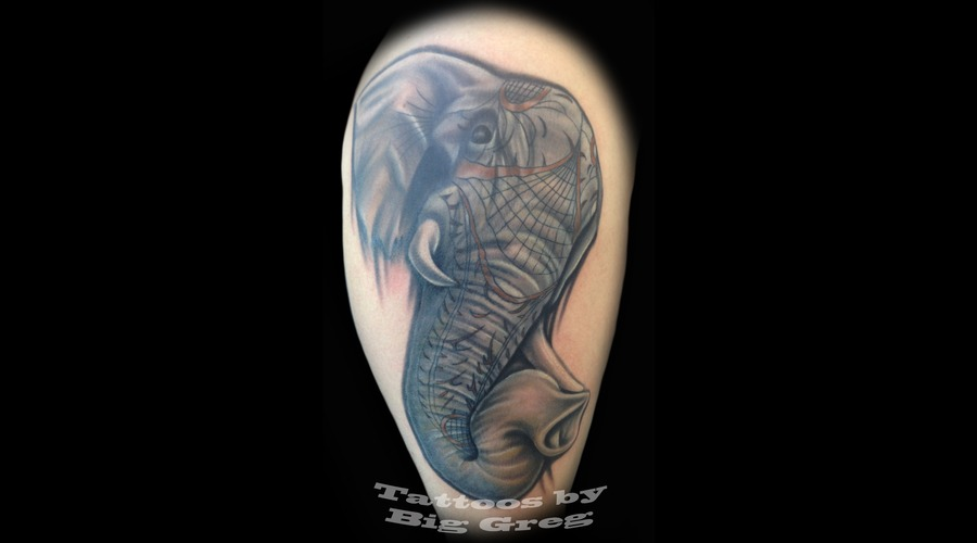 Realistic  Elephant  Markings Color Arm