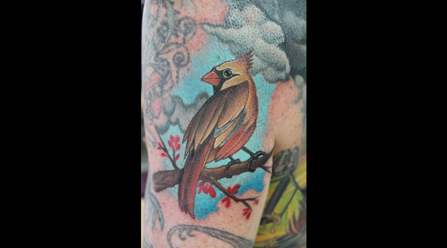 Cardinal  Bird Color
