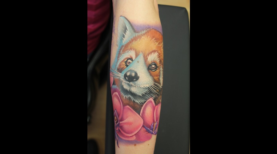 Red Panda  Animal Color