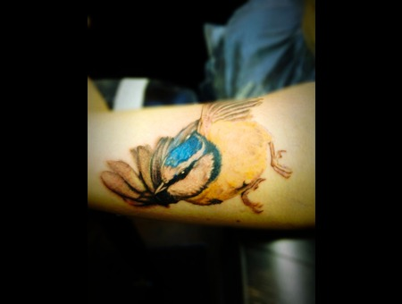Blue Tit  Bird  Colour Tattoo Color