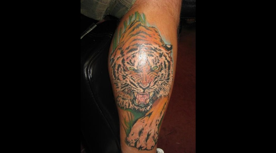 Lion  Realism Color