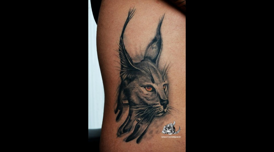 Lince  Caracal  Cat   Black White