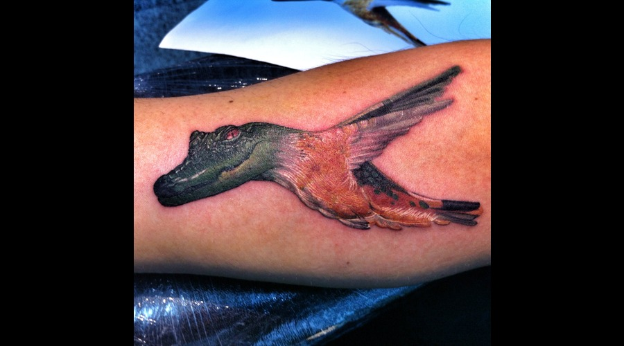 Crocodile  Bird  Small Color