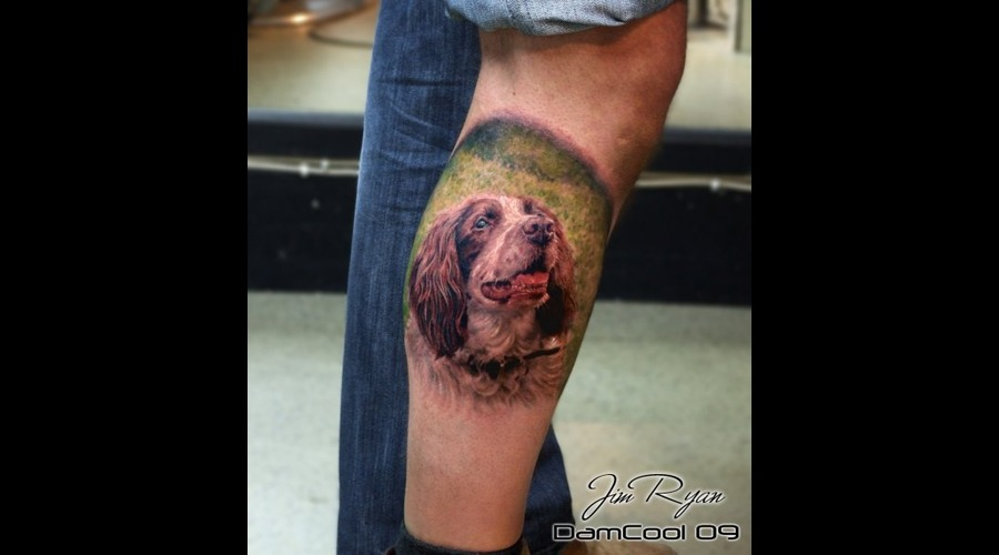 Portrait   Animal   Springer Spaniel  Realism  Lower Leg