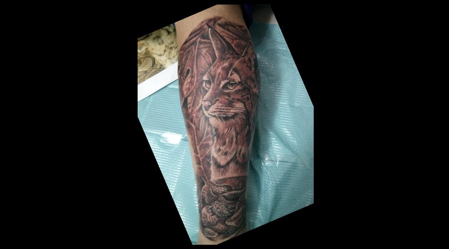 Bobcat Black White