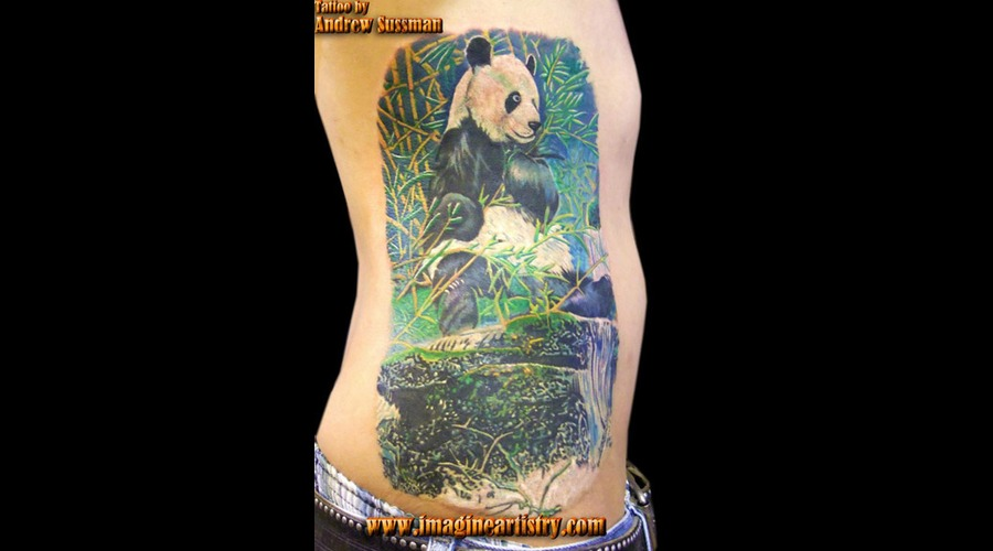 Panda  Wildlife  Animal  Nature Color