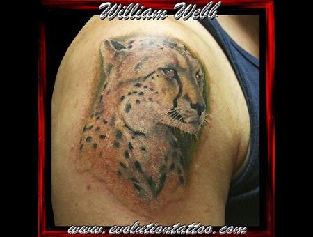 Animal Cat Leopard Cheetah William Webb Color