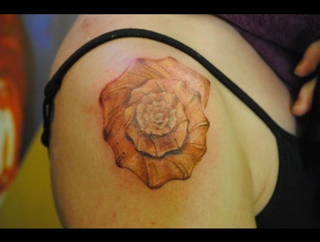 Conch Shell  Shell Tattoo Color