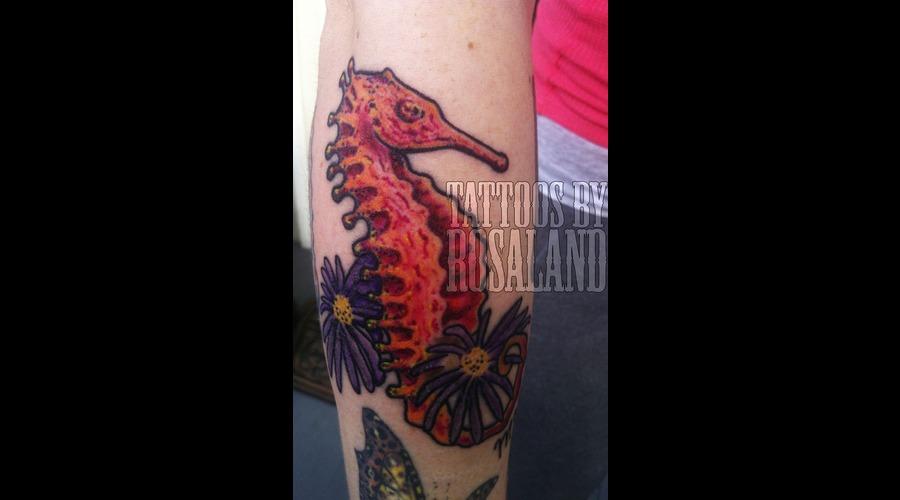 Seahorse Color Forearm
