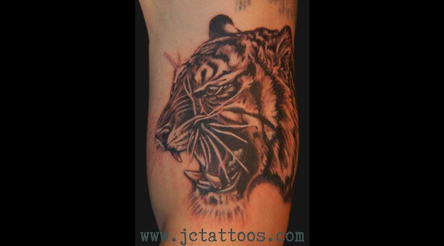 Tiger  Portrait  Black And Grey Black White