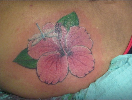 Flower  Hibiscus  Dragonfly Color