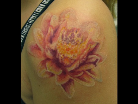 Color  Flower  Lineless  Realism  Lotus Color