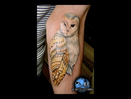 Owl  Realism  Arm Piece Color