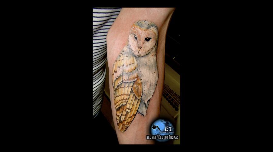 Owl  Realism  Arm Piece Color