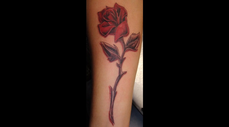 Rose  Colour Color Lower Leg