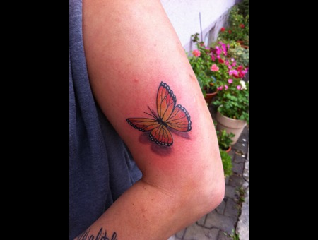Butterfly  Color  Realistic Color