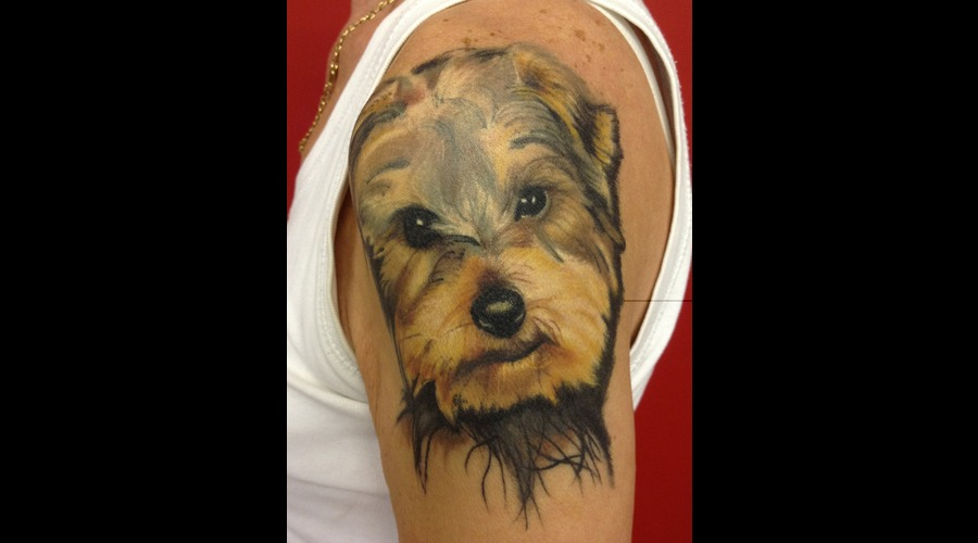Dog  Yorkshire Terrier   Color Arm