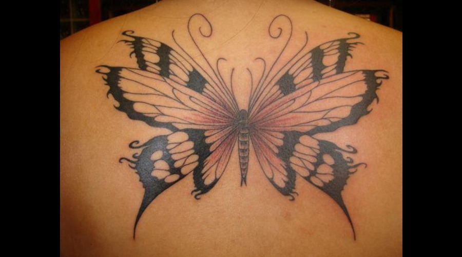 Butterfly Black Grey