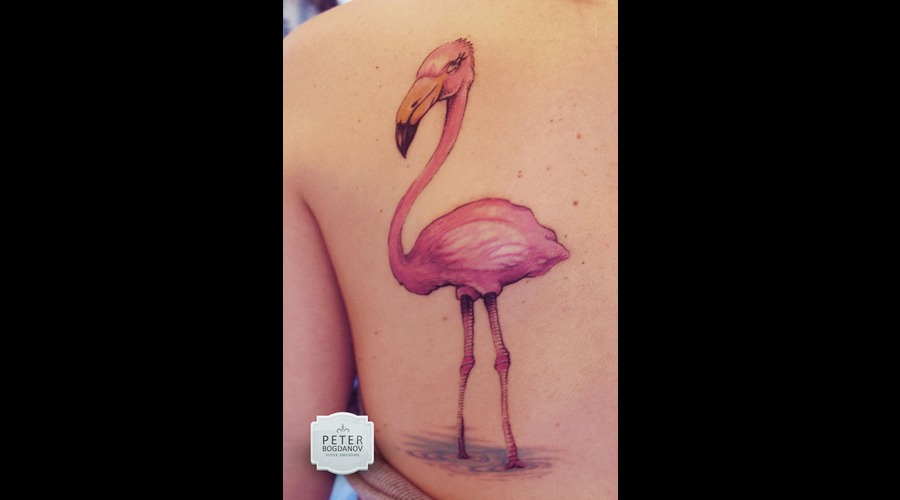 Flamingo Color Shoulder