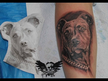 Dog Black White Lower Leg