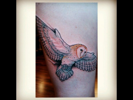 Barn Owl Bird Color